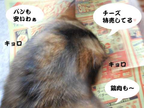 15_03_10_1.jpg