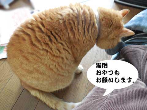 15_03_10_2.jpg