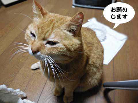 15_03_10_3.jpg