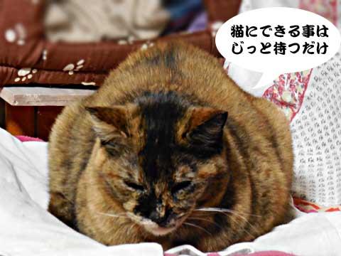 15_03_10_4.jpg