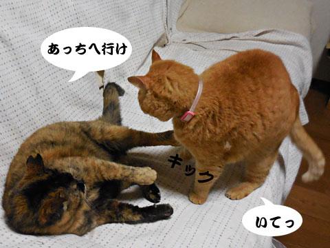 15_04_07_3.jpg