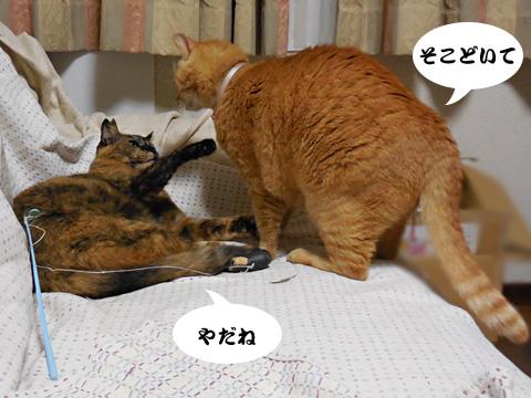 15_05_06_1.jpg