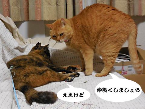 15_05_06_4.jpg