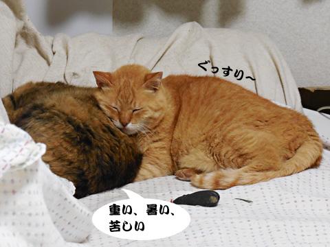 15_05_06_5.jpg