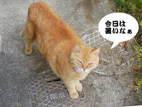 15_05_08_1.jpg