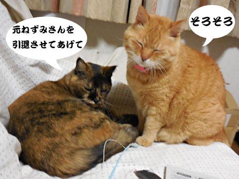 15_05_14_4.jpg