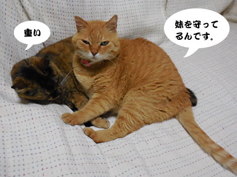 15_05_18_1.jpg