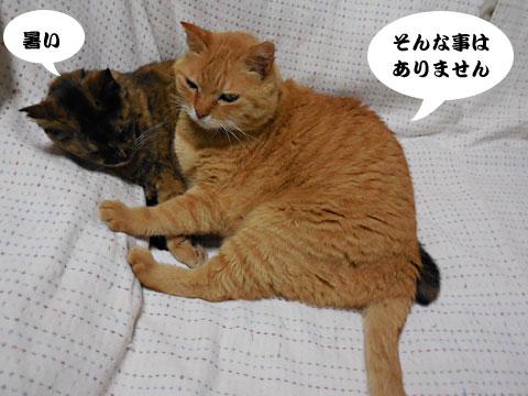 15_05_18_2.jpg