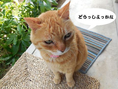 15_05_20_4.jpg