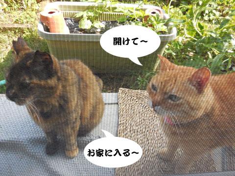 15_05_20_5.jpg