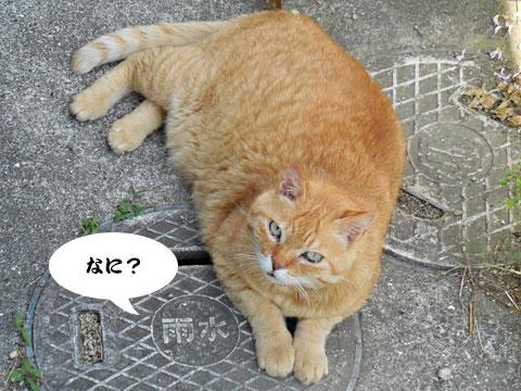 15_05_22_2.jpg