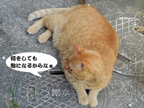 15_05_22_4.jpg