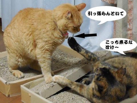 15_05_30_1.jpg