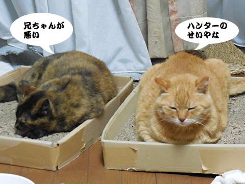 15_05_30_5.jpg