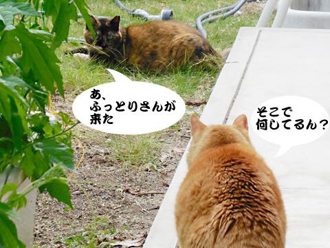 15_06_01_3.jpg