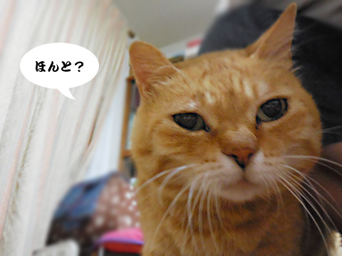15_06_09_2.jpg