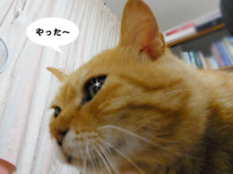 15_06_09_3.jpg