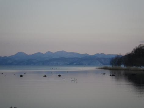 猪苗代湖モビレージ 白鳥