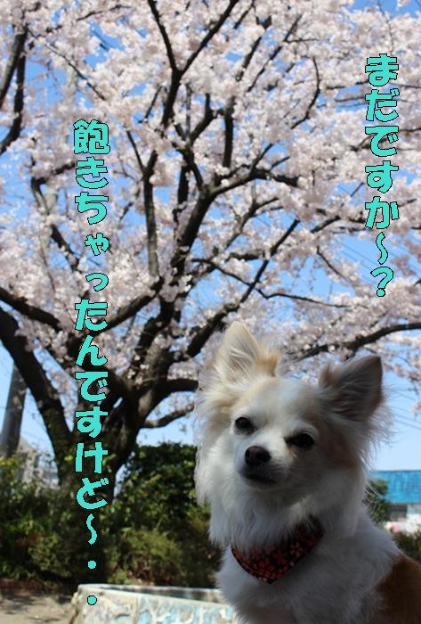 IMG_2322_11.jpg