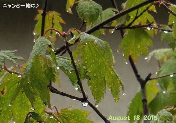 amesizuku818.jpg