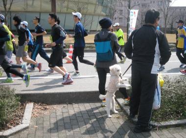 マラソンプレ大会いぬ 20150322