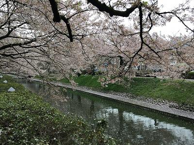 松川花筏2