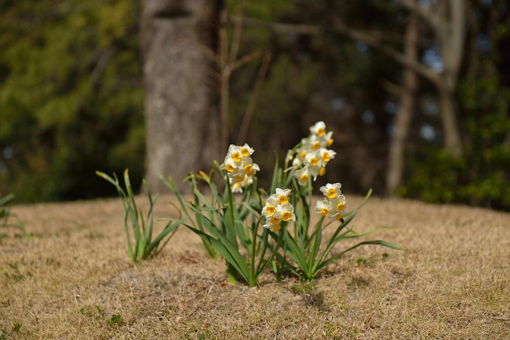 初春の日差しの下で