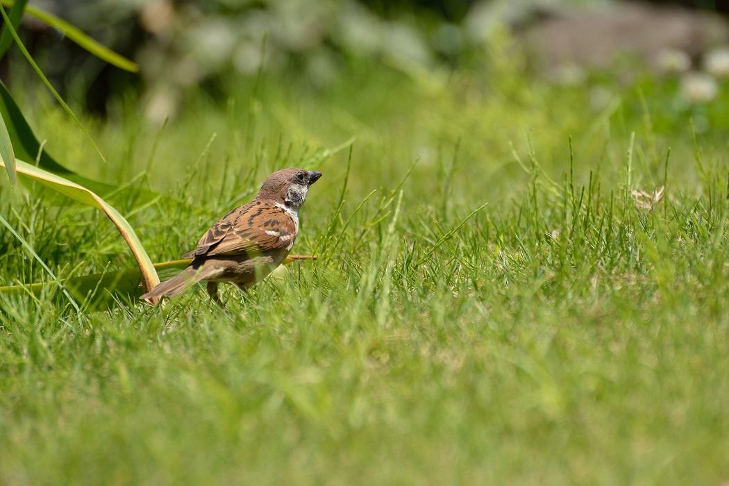 久々に鳥でも撮ってみる
