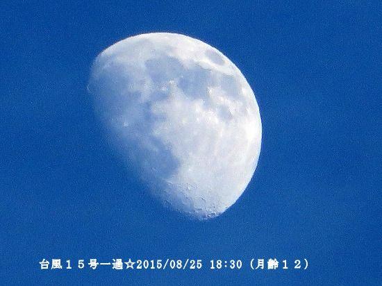 yf8975.jpg