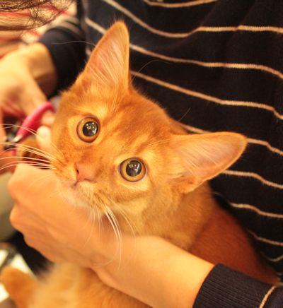 lea3_20150321catshow.jpg