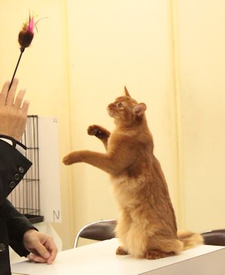 rosa1_20150321catshow.jpg