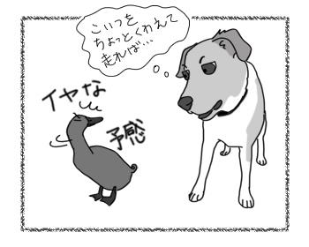羊の国のラブラドール絵日記シニア!!「チェイスの苦手」3