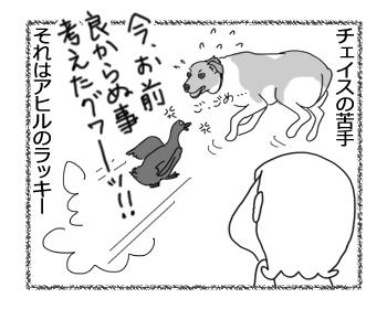 羊の国のラブラドール絵日記シニア!!「チェイスの苦手」4