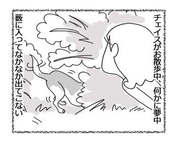 羊の国のラブラドール絵日記シニア!!「わかりやすいチェイス」1