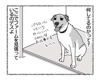 羊の国のラブラドール絵日記シニア!!「犬とアヒル」2