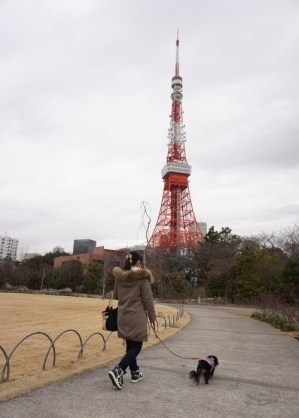 東京タワー (4)