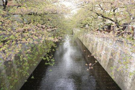 銀座目黒池尻 (2)