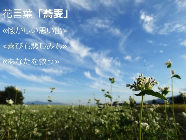 hanakotoba_soba.jpg