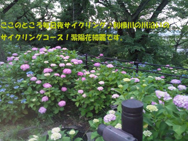 006-13567-98764.jpg