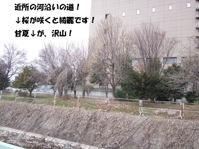 017-1987-456789.jpg