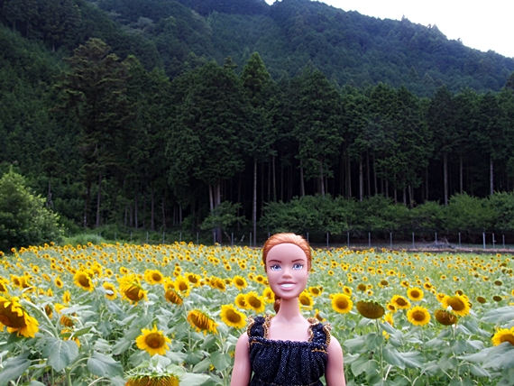 himawari-20150814-07s.jpg