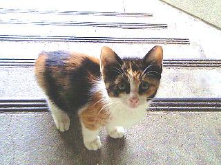 060628_迷子の子猫発見003QVGA