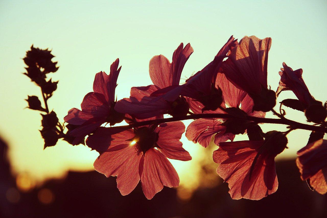 flower10_20150429091001d57.jpg