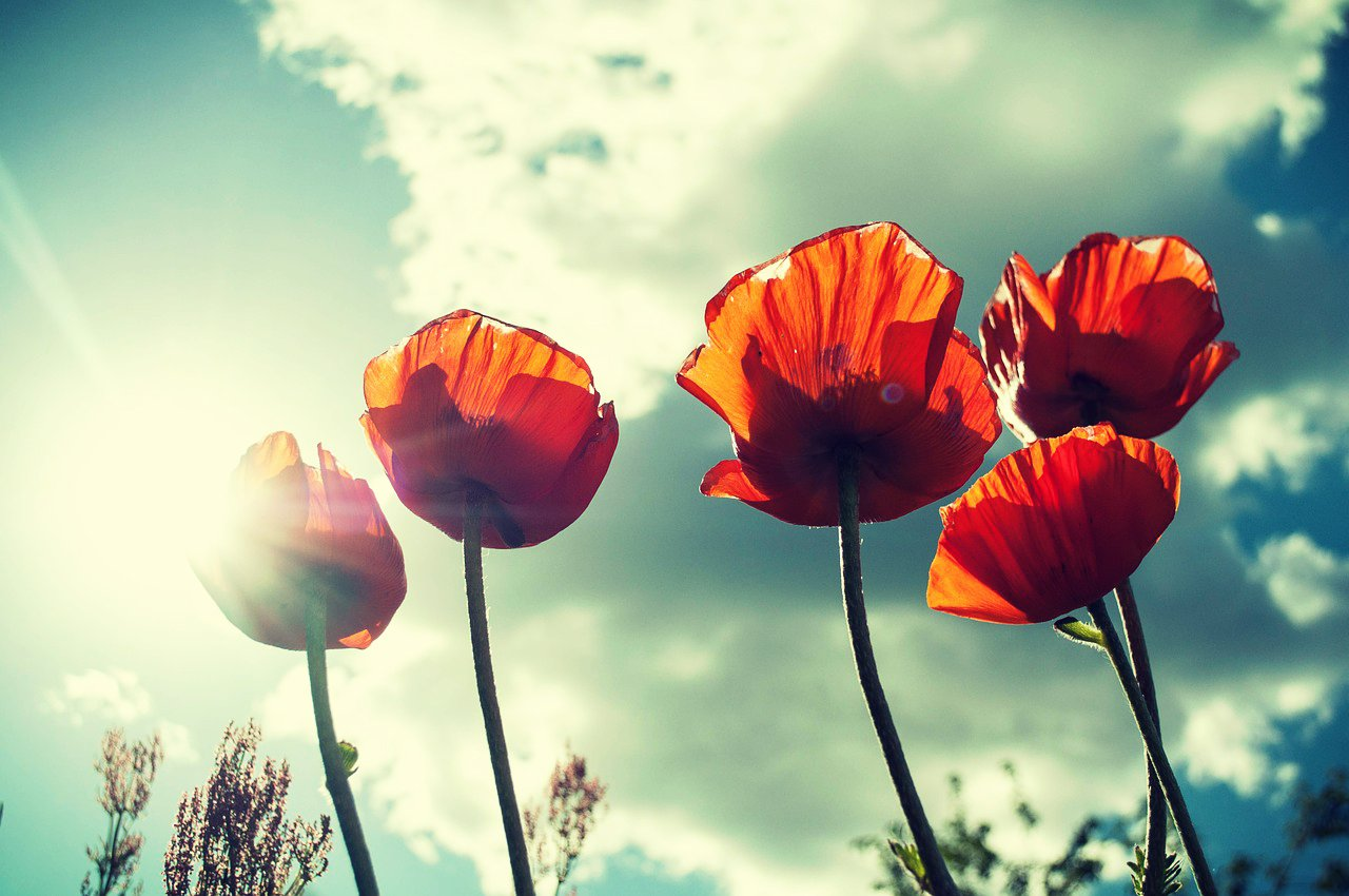 flower_20150428080803b53.jpg