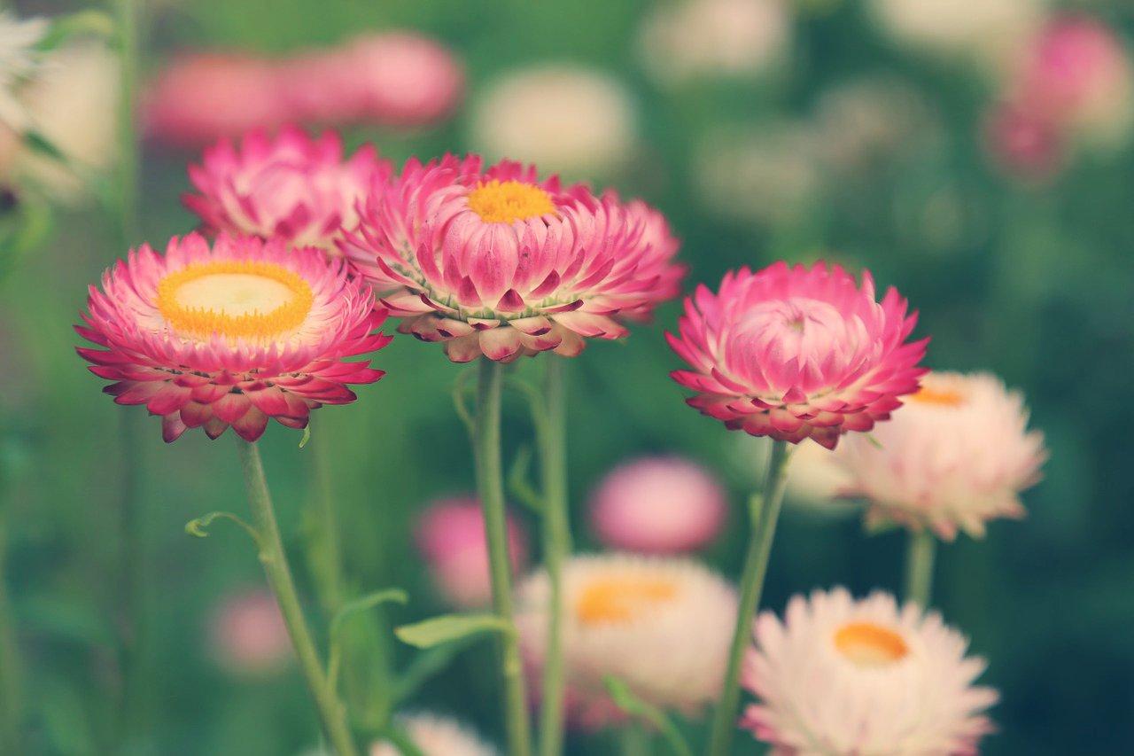 flowers39.jpg
