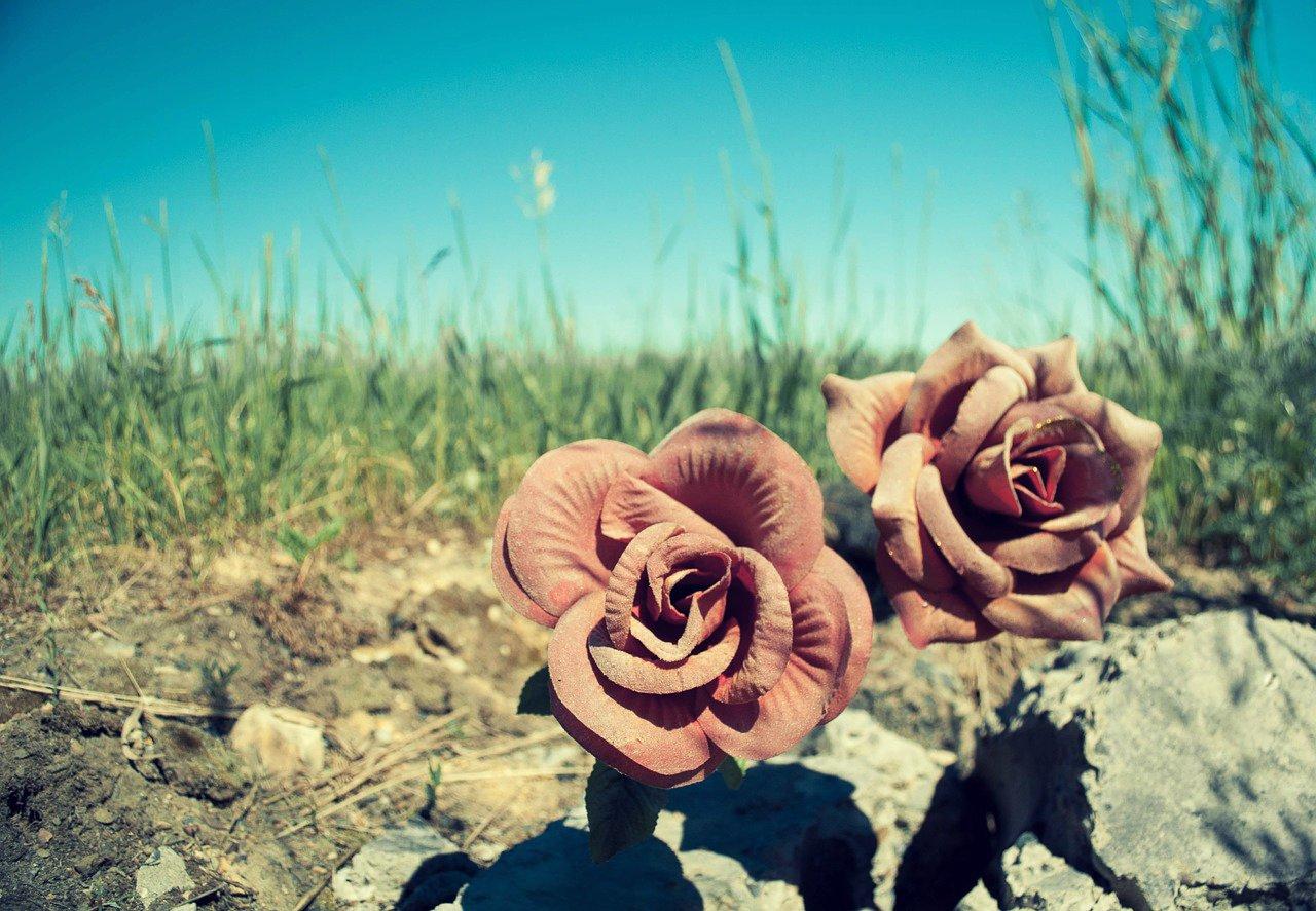 flowers_20150429125845911.jpg