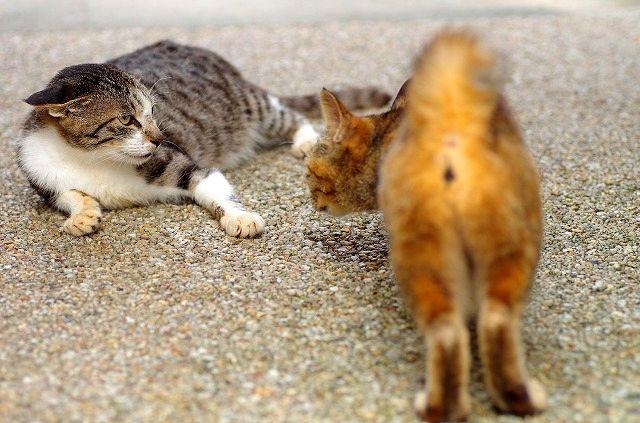 猫の楽園 前編 喧嘩勃発