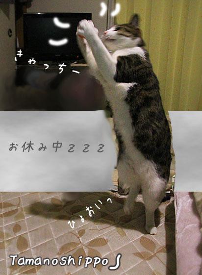 輪っかで遊ぶ猫(ちび)