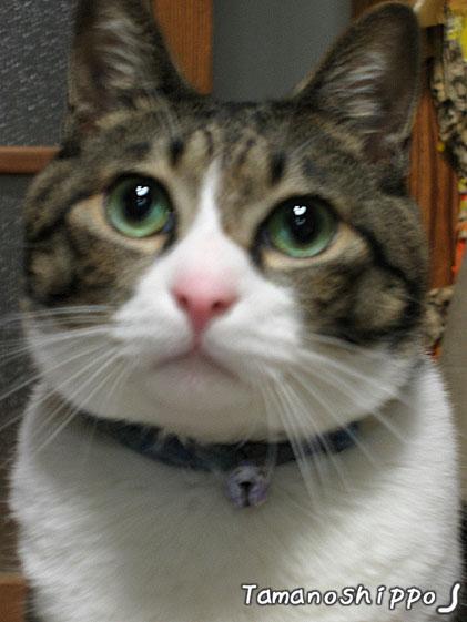 ポーと眺める猫(たま)3歳ごろ