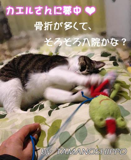 デンタルカエルさんと遊ぶ猫(ちび)